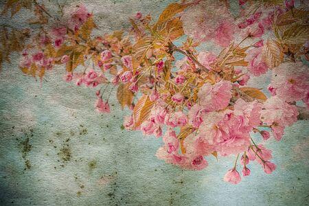 Lente sakura bloemen op uitstekende behangachtergrond