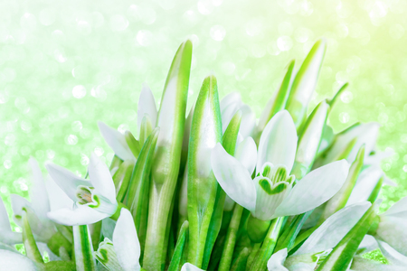 Bouquet of snowdrops on bokeh twinkle shiny background