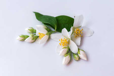 Set of jasmine flowers and branch on white background