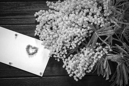 Mimosa flower blossom on wooden background. Greeting card with heart. Vintage black and white toned