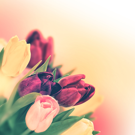 Tulip flower bouquet. Greeting card background. Vintage toned Stock Photo