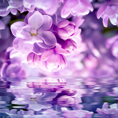 Lilac flower blossom, water reflection, light. Greeting card template. Soft toned. Nature background