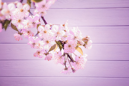 Sakura flower cherry blossom on wooden background. Greeting card template. Shallow depth. Soft toned