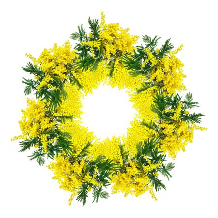 Mimosa flower circlet blossom isolated on white background. Greeting card frame template. Shellow depth . Soft toned