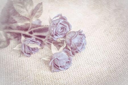 Beautiful rose soft blue flower blossom vintage grunge background. Greeting card template. Shallow depth. Soft beige toned. Paper texture.