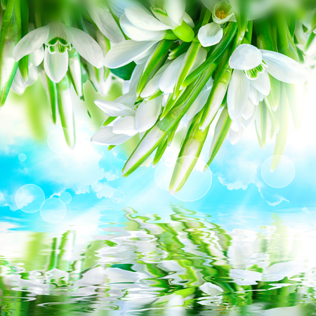Beautiful snowdrops flower blossom, water reflection,sky, clouds, light. Greeting square card template. Soft toned. Nature spring background Stock Photo