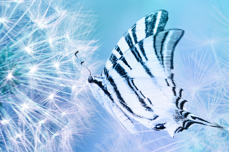Dandelion seeds closeup blowing and butterfly on light blue background. Greeting card template. Soft toned. Copy space. Spring nature.