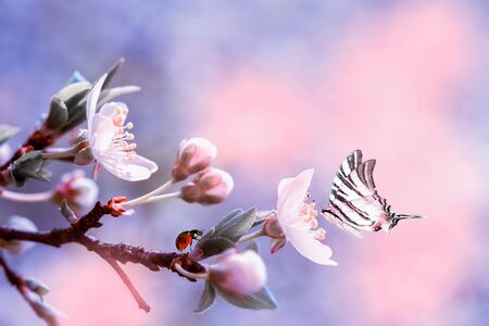 Beautiful sakura flower cherry blossom with ladybug and butterfly. Greeting card background template. Shallow depth. Soft pink and purple toned. Copy space.