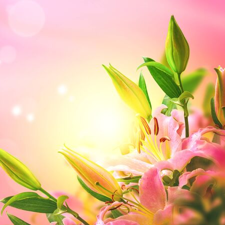 Beautiful lily flower blooming bouquet and sun square background. Greeting card template. Toned image. Summer nature.