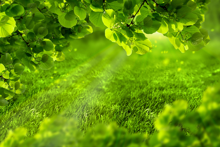 Beautiful eco green defocused spring or summer background with sunshine. Juicy young grass and foliage in rays of sunlight. Nature background. Soft toned. Copy space. Greeting card template. Stock fotó