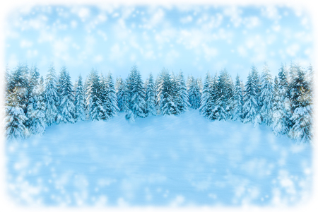White Christmas greeting card background. Snowfall forest landscape with copy space. Winter landscape with fir trees covered with snow. Soft toned.