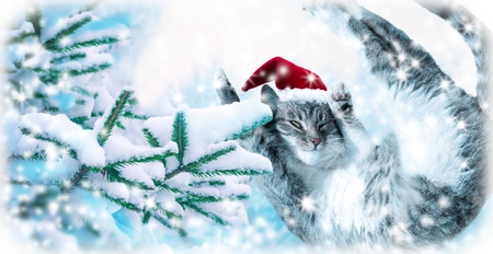 Flying or jumping funny tabby santa cat in red hat on covered with snow fir tree background. Winter Christmas panoramic greeting card, copy space. Holiday soft blue toned template.