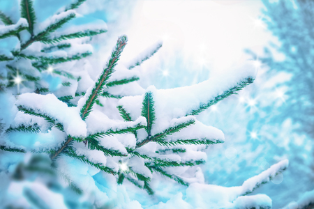 Beautiful fir tree covered snow, closeup. Winter Christmas scenic greeting card background, copy space. Holiday landscape, spruce branches, falling snowflakes. Nature outdoors. Soft blue toned.