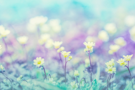 Beautiful micro wildflowers in the dreamy meadow. Delicate pink and blue colors pastel toned. Shallow depth macro background. Greeting card template. Copy space. Nature floral springtime.