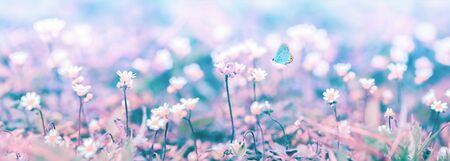 Beautiful micro wildflowers and butterfly in the dreamy meadow panorama. Delicate pink and blue colors pastel toned. Shallow depth macro panoramic background. Greeting card template. Copy space. Nature floral springtime.