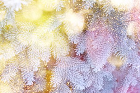 Christmas winter fir tree scenic background. Branches covered with snow in the frost. Copy space. Falling sparkles and lights bokeh closeup. Soft pastel toned blue, gold and purple. Greeting card background. 版權商用圖片