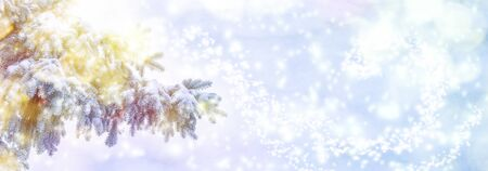 Beautiful fir tree covered snow, closeup. Winter Christmas greeting card panoramic background, copy space. Holiday spruce branches landscape, falling snowflakes. Nature panorama. Soft blue toned. 版權商用圖片