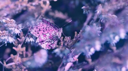 Beautiful flowers, butterfly in the dreamy meadow. Delicate pink and blue colors pastel toned. Shallow depth macro background. Greeting card template. Copy space. Nature floral springtime.