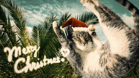 Flying or jumping funny tabby santa cat in red hat on vacation paradise palm tree background. Christmas panoramic greeting card, copy space. Holiday relaxation template. Vintage toned.