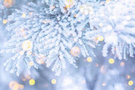 Christmas winter fir tree scenic background. Branches covered with snow in the frost. Copy space. Falling sparkles and lights bokeh closeup. Soft pastel toned blue, gold and purple. Greeting card background.