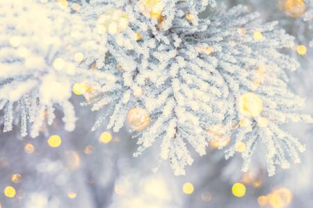 Christmas winter fir tree scenic background. Branches covered with snow in the frost. Copy space. Falling sparkles and lights bokeh closeup. Soft vintage toned blue, gold and purple. Greeting card background.