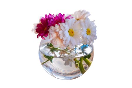 Bouquet of camomile gerbera white and pink flowers in glass vase isolated on white background. Shallow depth. Soft focus pastel toned image. Greeting vintage card template. Floral springtime. Copy space.