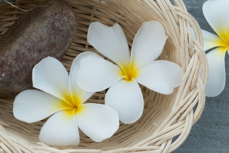 scincare: Spa and wellness composition with have close up white Frangipani flowers and stone in the wood basket on gray background