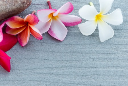 scincare: Spa and wellness composition with have close up group of frangipani colorful flowers on gray background