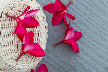 scincare: Pink frangipani flowers on wood basket gray background.Spa and wellness composition for background Stock Photo