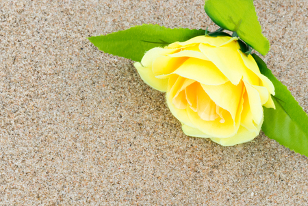 Yellow rose flower on a background of beach sand. Summer love background