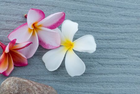 scincare: Spa and wellness composition with have group of frangipani colorful flowers on gray background Stock Photo