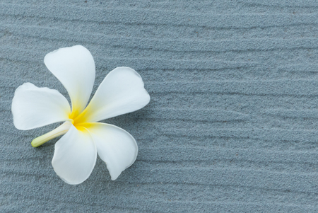 scincare: Spa and wellness composition with have white Frangipani flowers on gray background Stock Photo