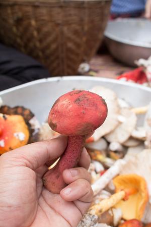 wild mushrooms: Mushroom on rural market. Stock Photo