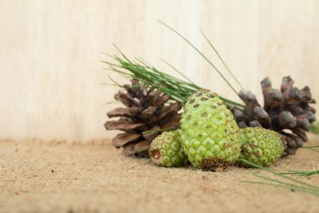 suggestions: fresh pinecone for make fresh pinecone tea. Stock Photo
