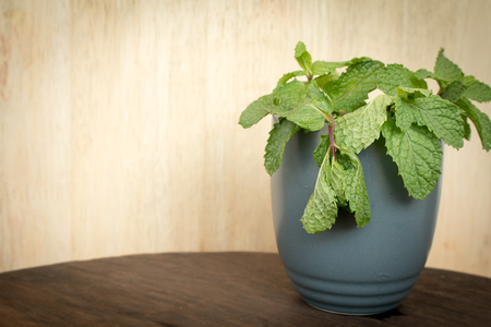 ingradient: Close up of withering mint leaves in a ceramic mug.