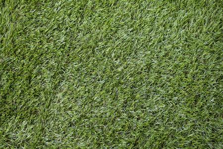 synthetic fiber: Artificial Grass Field Top View Texture.