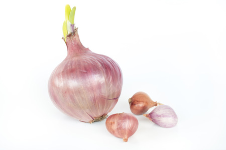 Closeup of Shallots on white background.
