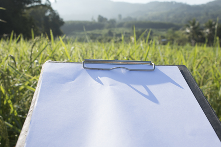 Hand holding a pen and clipboard with blank paper (document, report) checking rice growth. Stock Photo