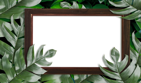 Tropical palm leaves with empty wooden frame for your design  Minimal nature. Summer Styled. Flat lay, Original dimensions 6408 X 3780 pixels . Stock Photo