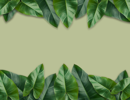 Tropical palm leaves with empty paper for your design  Minimal nature. Summer Styled. Flat lay, Original dimensions 7500 X 5780 pixels. Stock Photo