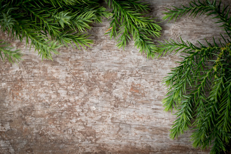 Branches arborvitae, Juniper branches on wood Christmas background.
