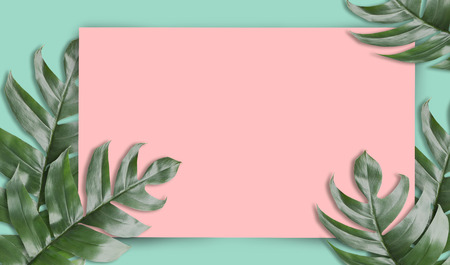 Tropical palm leaves with empty paper for your design  Minimal nature. Summer Styled. Flat lay, Original dimensions 6480 X 3780 pixels.