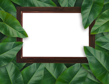 Tropical palm leaves with empty wooden frame for your design  Minimal nature. Summer Styled. Flat lay, Original dimensions 7500 X 5780 pixels . Stock Photo