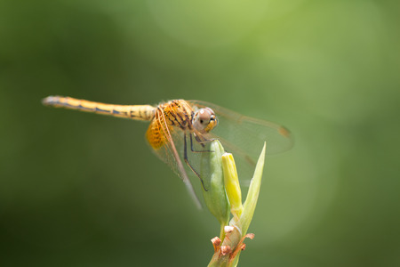 Close up of small beautiful dragonfly Stock Photo
