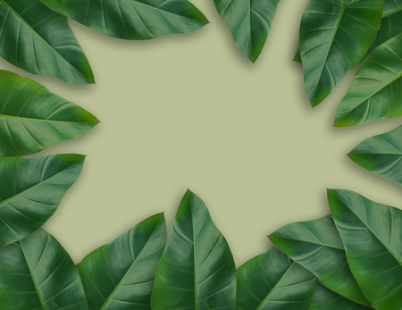 Green Caladium leaves tropical plant leaf set for nature background or green tropical leave frame concept natural background Stock Photo