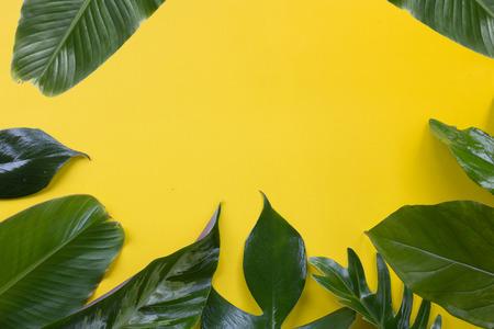 Groen tropisch blad op geel ontwerp als achtergrond voor ecorachtergrond of achtergrond van het oerwoudbehang.