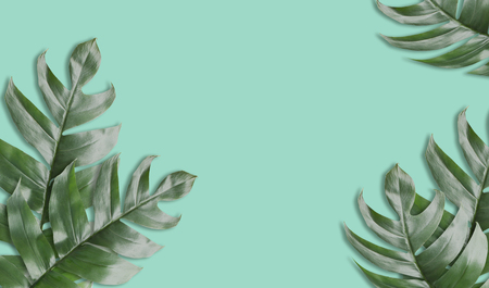Green tropical leafs fram with vintage green tone background or green tropical leave frame concept natural background Stock Photo