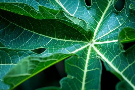 Background of Tropical Leaves soft focused image leaf.
