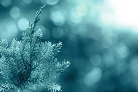 enebro: Pine tree, Evergreen juniper background. Christmas and Winter wallpaper.