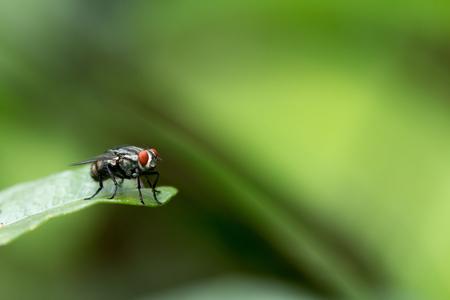 A Fly on a green leaf.